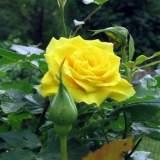 FB_IMG_1553829704578